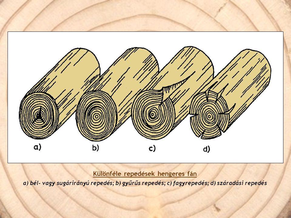 Különféle repedések hengeres fán a) bél- vagy sugárirányú repedés; b) gyűrűs repedés; c) fagyrepedés; d) száradási repedés