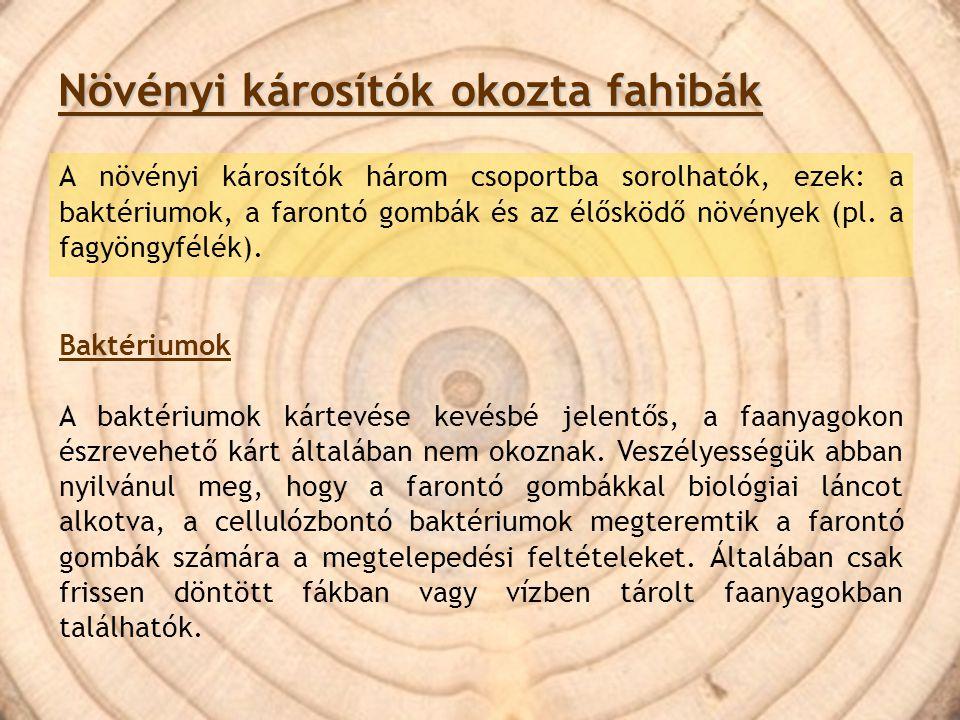 Rovarok okozta fahibák: Rovar- és álcajáratoknak nevezzük a rovarok, ill.