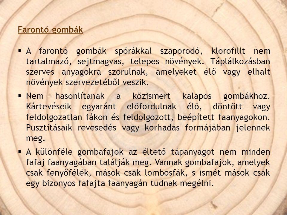Farontó gombák  A farontó gombák spórákkal szaporodó, klorofillt nem tartalmazó, sejtmagvas, telepes növények. Táplálkozásban szerves anyagokra szoru