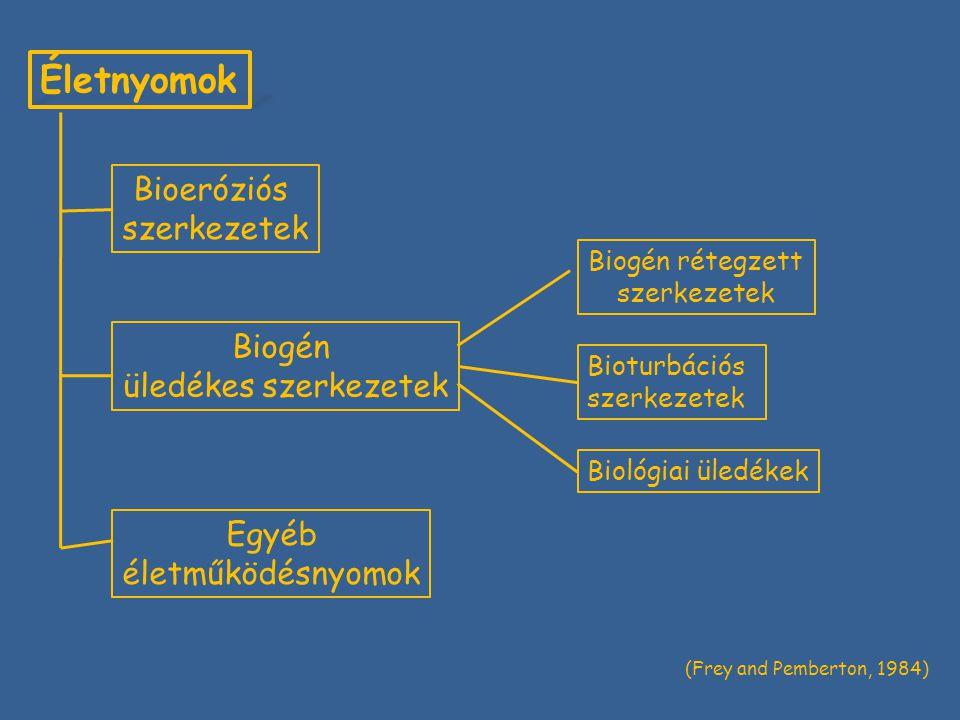 Életnyomok Bioeróziós szerkezetek Biogén üledékes szerkezetek Egyéb életműködésnyomok Biogén rétegzett szerkezetek Bioturbációs szerkezetek Biológiai