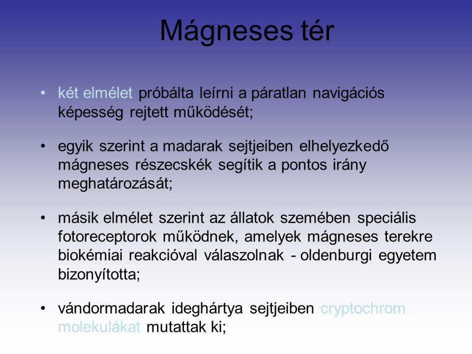 Mágneses tér két elmélet próbálta leírni a páratlan navigációs képesség rejtett működését; egyik szerint a madarak sejtjeiben elhelyezkedő mágneses ré