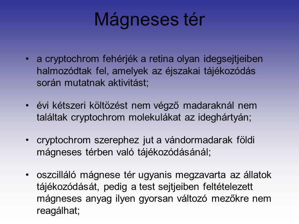 Mágneses tér a cryptochrom fehérjék a retina olyan idegsejtjeiben halmozódtak fel, amelyek az éjszakai tájékozódás során mutatnak aktivitást; évi kéts