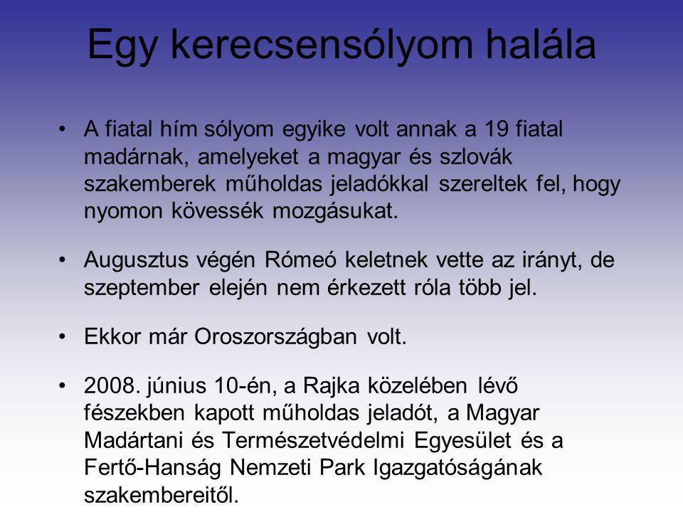 Egy kerecsensólyom halála A fiatal hím sólyom egyike volt annak a 19 fiatal madárnak, amelyeket a magyar és szlovák szakemberek műholdas jeladókkal sz