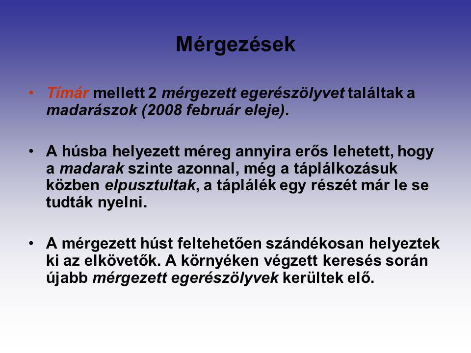 Mérgezések Tímár mellett 2 mérgezett egerészölyvet találtak a madarászok (2008 február eleje). A húsba helyezett méreg annyira erős lehetett, hogy a m