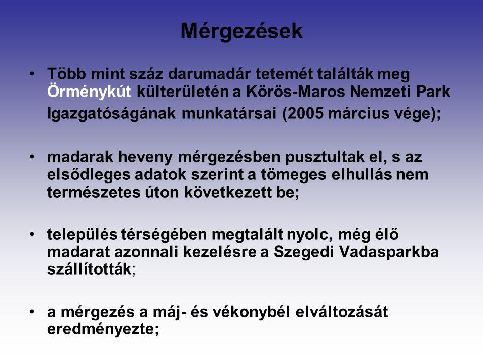 Mérgezések Több mint száz darumadár tetemét találták meg Örménykút külterületén a Körös-Maros Nemzeti Park Igazgatóságának munkatársai (2005 március v