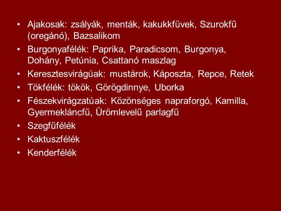 Ajakosak: zsályák, menták, kakukkfüvek, Szurokfű (oregánó), Bazsalikom Burgonyafélék: Paprika, Paradicsom, Burgonya, Dohány, Petúnia, Csattanó maszlag