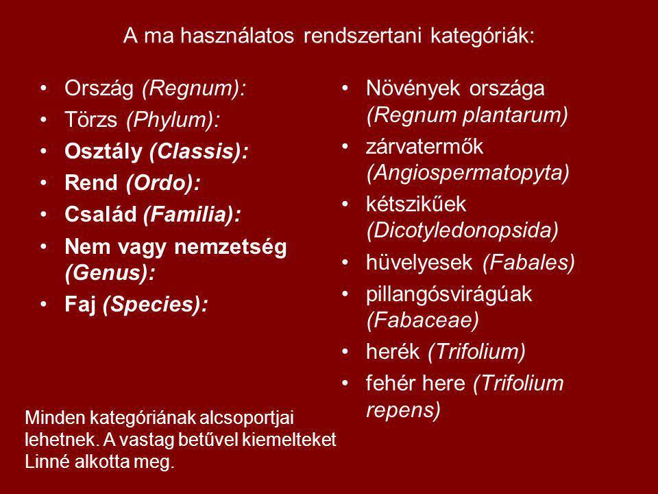 A ma használatos rendszertani kategóriák: Ország (Regnum): Törzs (Phylum): Osztály (Classis): Rend (Ordo): Család (Familia): Nem vagy nemzetség (Genus