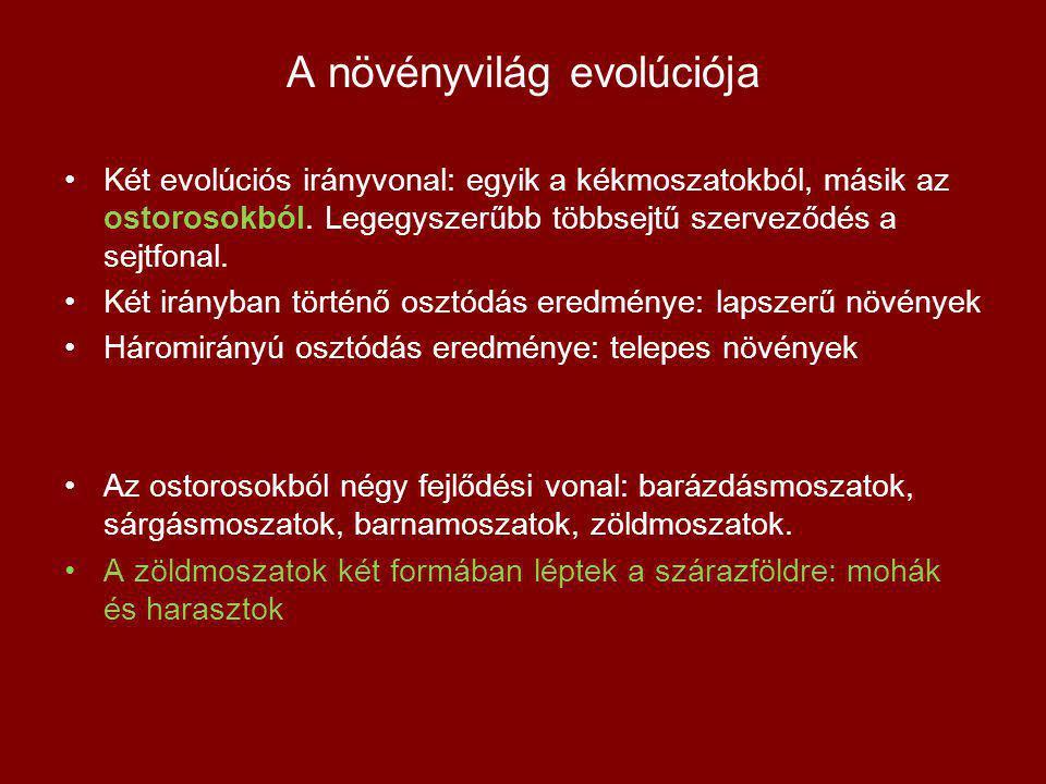 A növényvilág evolúciója Két evolúciós irányvonal: egyik a kékmoszatokból, másik az ostorosokból. Legegyszerűbb többsejtű szerveződés a sejtfonal. Két