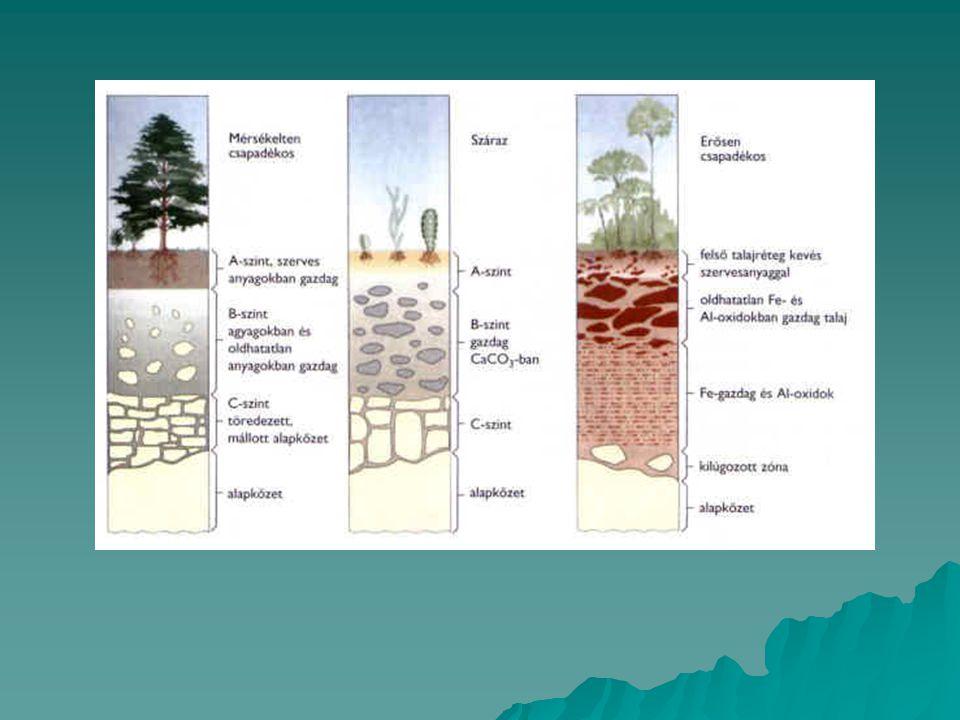 Talajt szennyező források  Mezőgazdaság (vegyszerek, műtrágya)  Közlekedés (ólom, olajszármazékok)  Hulladéktározók, szemét  Ipar (nehézfémek, azbeszt, építési törmelék)