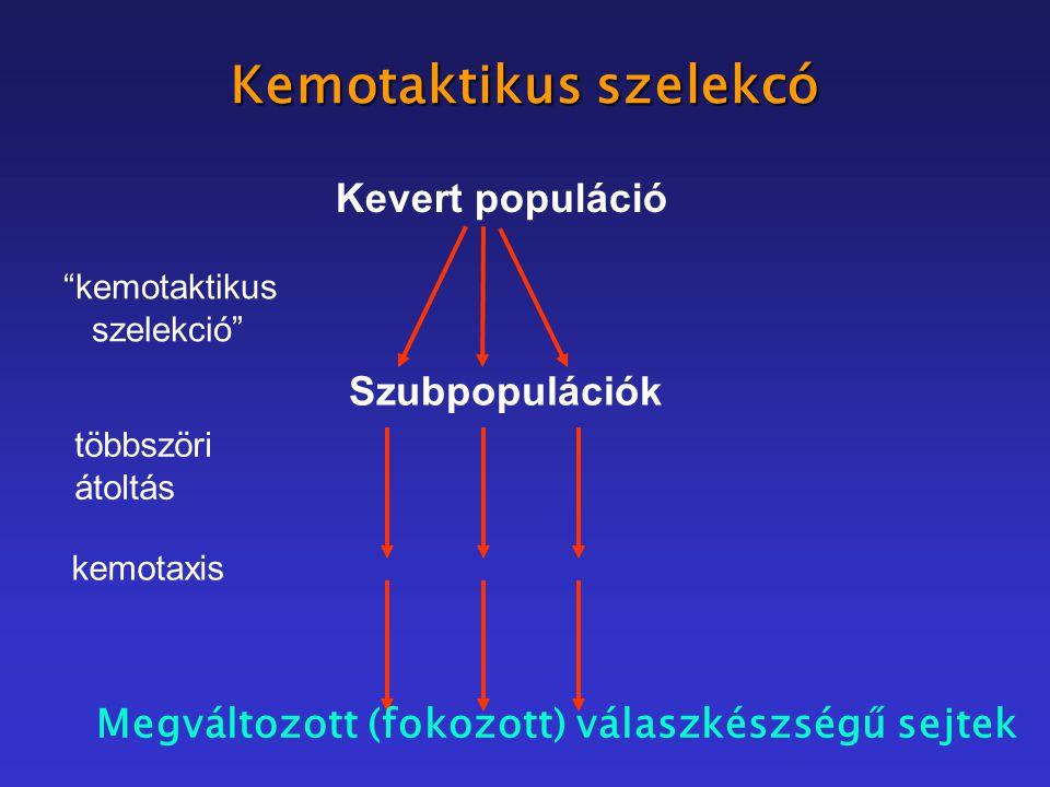 Kemotaktikus szelekcó Kevert populáció kemotaktikus szelekció Szubpopulációk többszöri átoltás kemotaxis Megváltozott (fokozott) válaszkészségű sejtek