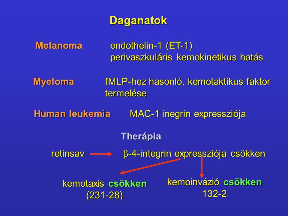 DaganatokMelanoma endothelin-1 (ET-1) perivaszkuláris kemokinetikus hatás MyelomafMLP-hez hasonló, kemotaktikus faktor termelése Human leukemiaMAC-1 inegrin expressziója Therápia retinsav  -4-integrin expressziója csökken kemotaxis csökken (231-28) kemoinvázió csökken 132-2