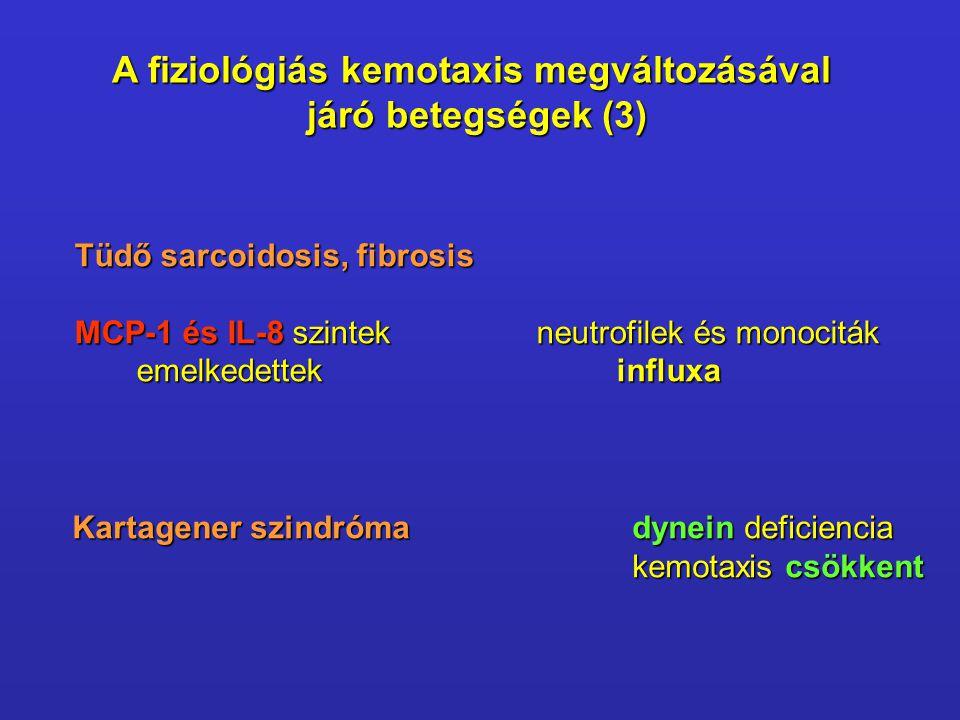 A fiziológiás kemotaxis megváltozásával járó betegségek (3) Tüdő sarcoidosis, fibrosis Tüdő sarcoidosis, fibrosis MCP-1 és IL-8 szintekneutrofilek és monociták MCP-1 és IL-8 szintekneutrofilek és monociták emelkedettekinfluxa Kartagener szindrómadynein deficiencia kemotaxis csökkent