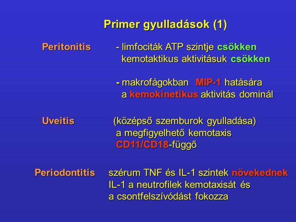 Primer gyulladások (1) Peritonitis- limfociták ATP szintje csökken kemotaktikus aktivitásuk csökken kemotaktikus aktivitásuk csökken - makrofágokban MIP-1 hatására a kemokinetikus aktivitás dominál a kemokinetikus aktivitás dominál Uveitis (középső szemburok gyulladása) a megfigyelhető kemotaxis CD11/CD18-függő Periodontitisszérum TNF és IL-1 szintek növekednek IL-1 a neutrofilek kemotaxisát és a csontfelszívódást fokozza
