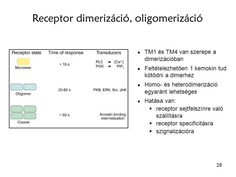 26 Receptor dimerizáció, oligomerizáció ● TM1 és TM4 van szerepe a dimerizációban ● Feltételezhetően 1 kemokin tud kötődni a dimerhez ● Homo- és heter