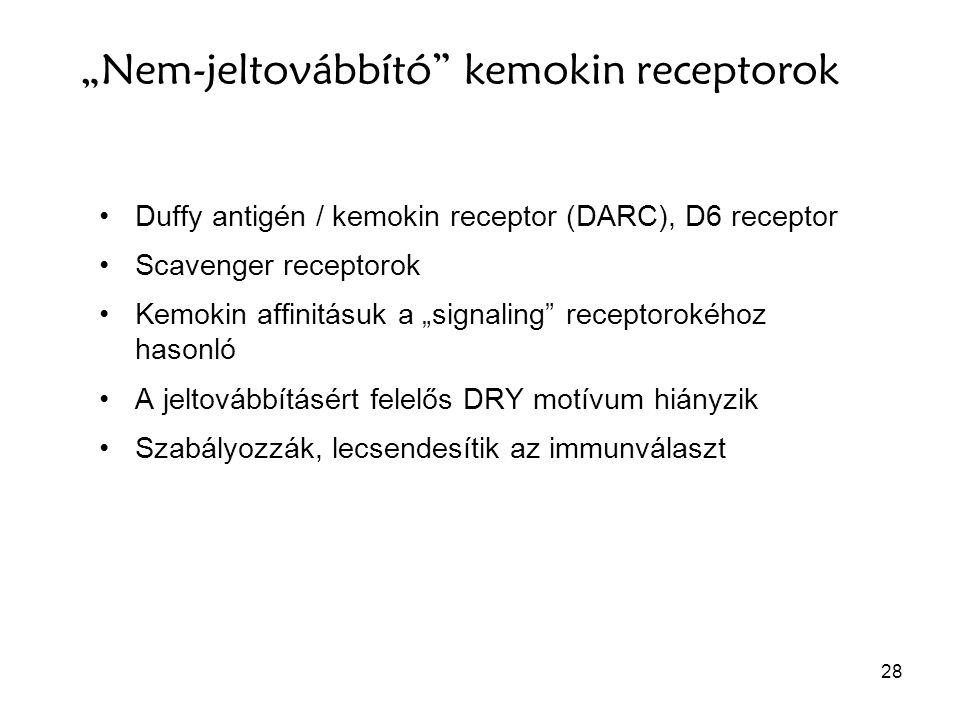 """28 """"Nem-jeltovábbító"""" kemokin receptorok Duffy antigén / kemokin receptor (DARC), D6 receptor Scavenger receptorok Kemokin affinitásuk a """"signaling"""" r"""