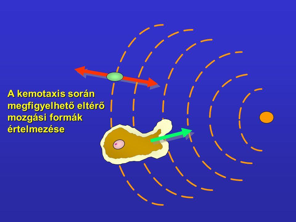 A kemotaxis során megfigyelhető eltérő mozgási formák értelmezése