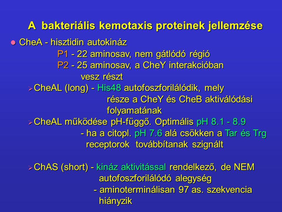 A bakteriális kemotaxis proteinek jellemzése CheA - hisztidin autokináz CheA - hisztidin autokináz P1 - 22 aminosav, nem gátlódó régió P2 - 25 aminosa