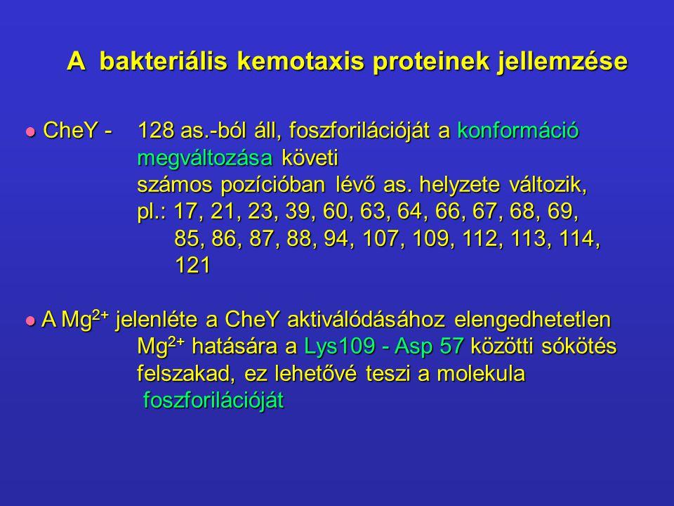 CheY - 128 as.-ból áll, foszforilációját a konformáció CheY - 128 as.-ból áll, foszforilációját a konformáció megváltozása követi számos pozícióban lé