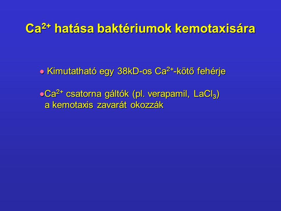 Ca 2+ hatása baktériumok kemotaxisára Kimutatható egy 38kD-os Ca 2+ -kötő fehérje Kimutatható egy 38kD-os Ca 2+ -kötő fehérje Ca 2+ csatorna gáltók (p