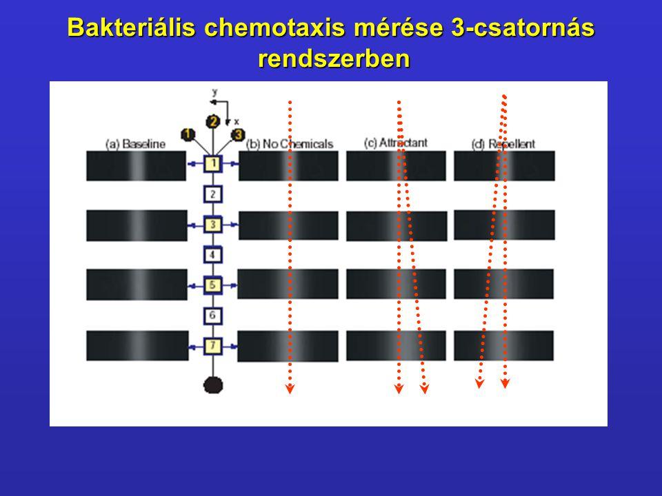 Bakteriális chemotaxis mérése 3-csatornás rendszerben rendszerben