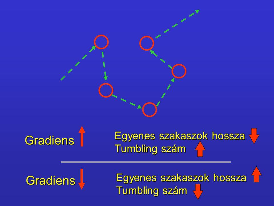 Gradiens Egyenes szakaszok hossza Tumbling szám Gradiens Egyenes szakaszok hossza Tumbling szám