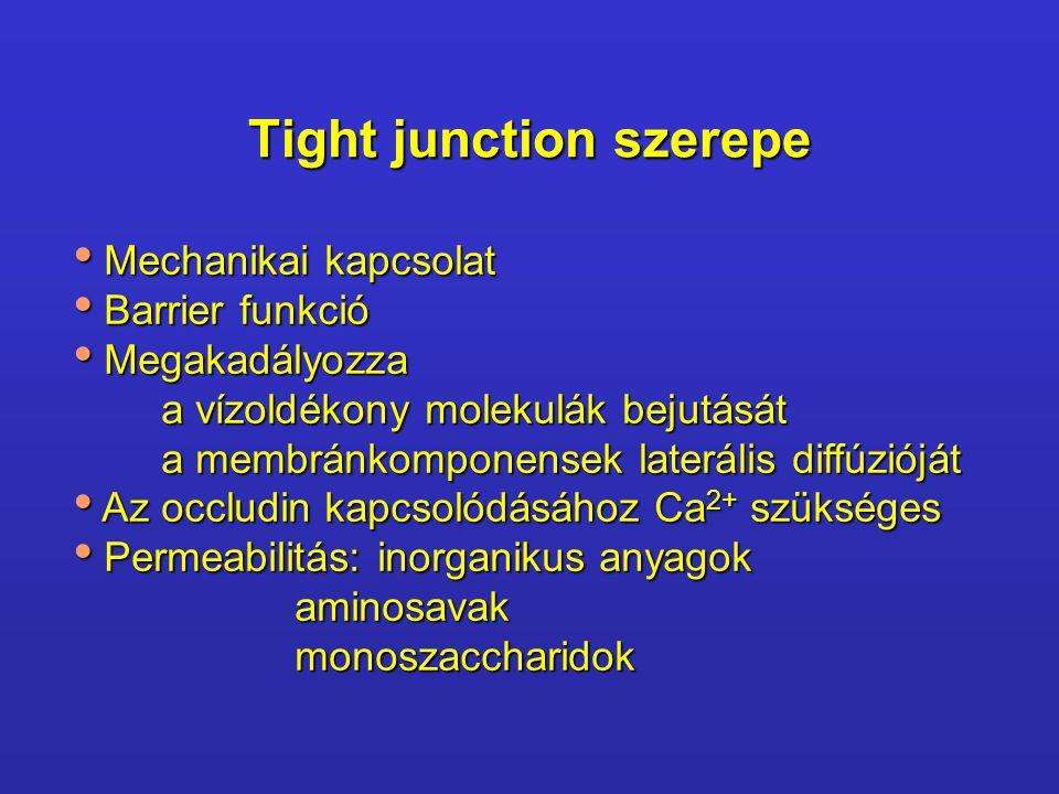 Tight junction szerepe Mechanikai kapcsolat Mechanikai kapcsolat Barrier funkció Barrier funkció Megakadályozza Megakadályozza a vízoldékony molekulák bejutását a membránkomponensek laterális diffúzióját Az occludin kapcsolódásához Ca 2+ szükséges Az occludin kapcsolódásához Ca 2+ szükséges Permeabilitás: inorganikus anyagok Permeabilitás: inorganikus anyagok aminosavak aminosavak monoszaccharidok monoszaccharidok