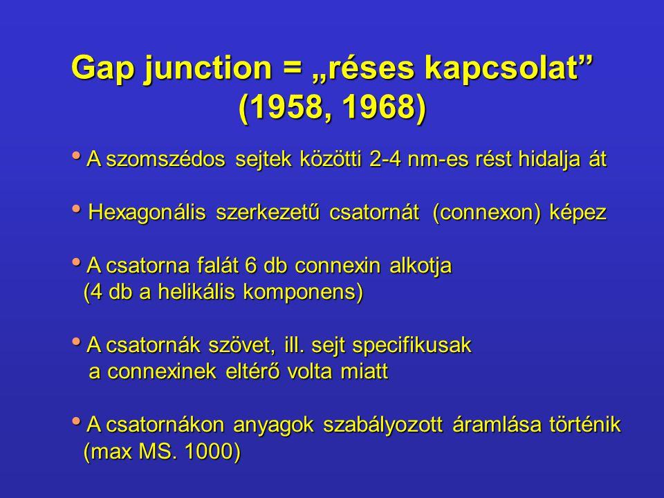 """Gap junction = """"réses kapcsolat"""" (1958, 1968) A szomszédos sejtek közötti 2-4 nm-es rést hidalja át A szomszédos sejtek közötti 2-4 nm-es rést hidalja"""