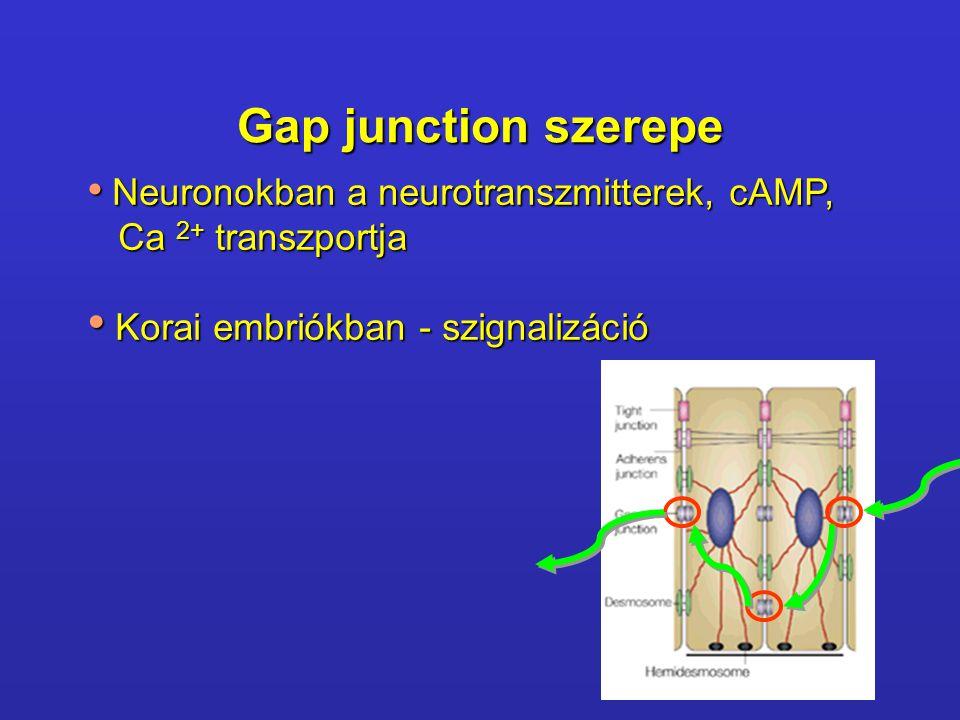 Gap junction szerepe Neuronokban a neurotranszmitterek, cAMP, Neuronokban a neurotranszmitterek, cAMP, Ca 2+ transzportja Ca 2+ transzportja Korai embriókban - szignalizáció Korai embriókban - szignalizáció