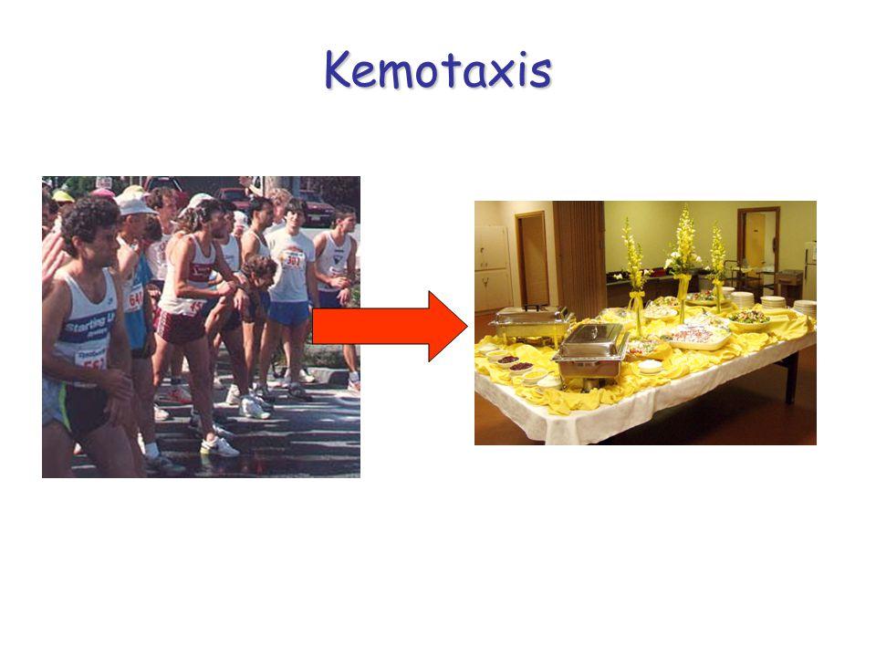 Kemotaxis