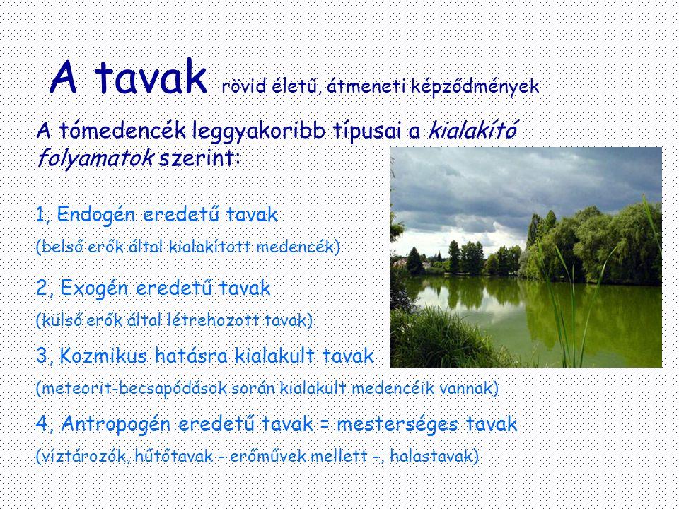 A tavak rövid életű, átmeneti képződmények A tómedencék leggyakoribb típusai a kialakító folyamatok szerint: 1, Endogén eredetű tavak (belső erők álta