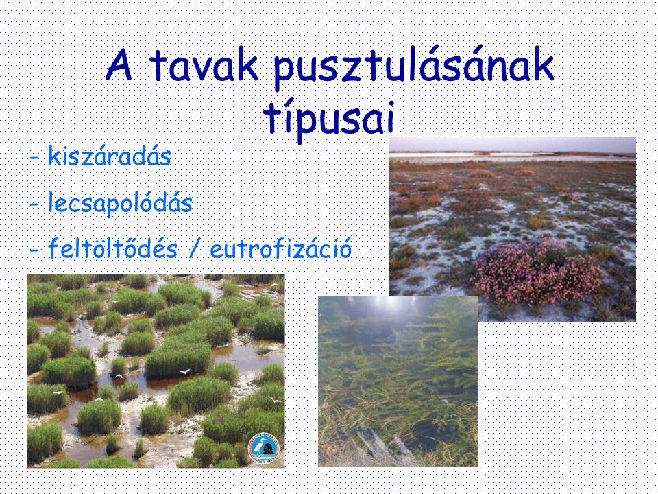 A tavak pusztulásának típusai - kiszáradás - lecsapolódás - feltöltődés / eutrofizáció