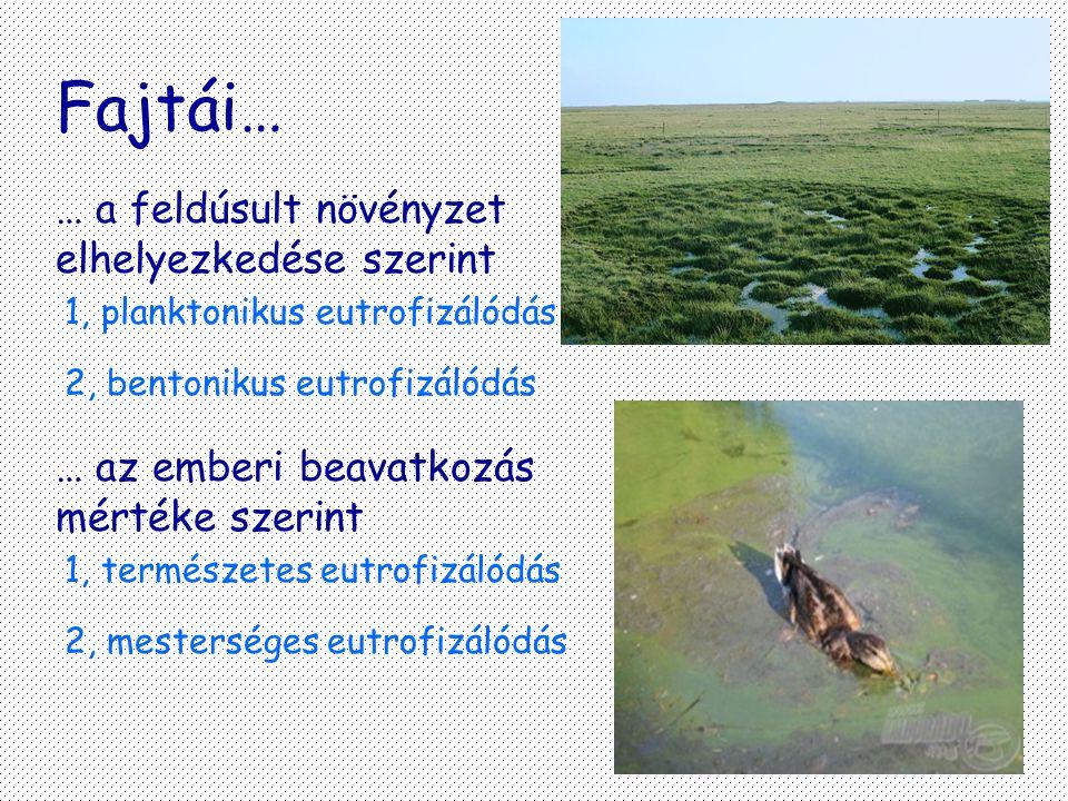 Fajtái… … a feldúsult növényzet elhelyezkedése szerint 1, planktonikus eutrofizálódás 2, bentonikus eutrofizálódás … az emberi beavatkozás mértéke sze