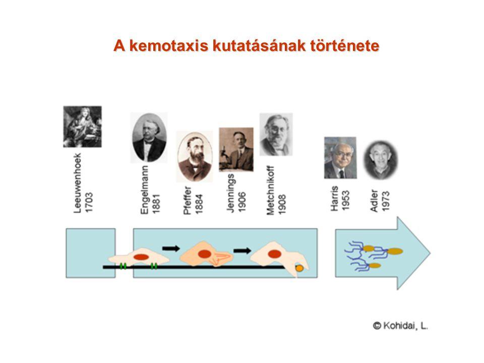 A kemotaxis kutatásának története