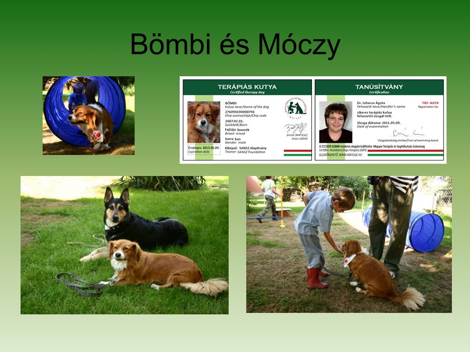 Bömbi és Móczy