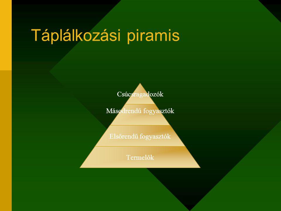 Táplálkozási piramis Csúcsragadozók Másodrendű fogyasztók Elsőrendű fogyasztók Termelők