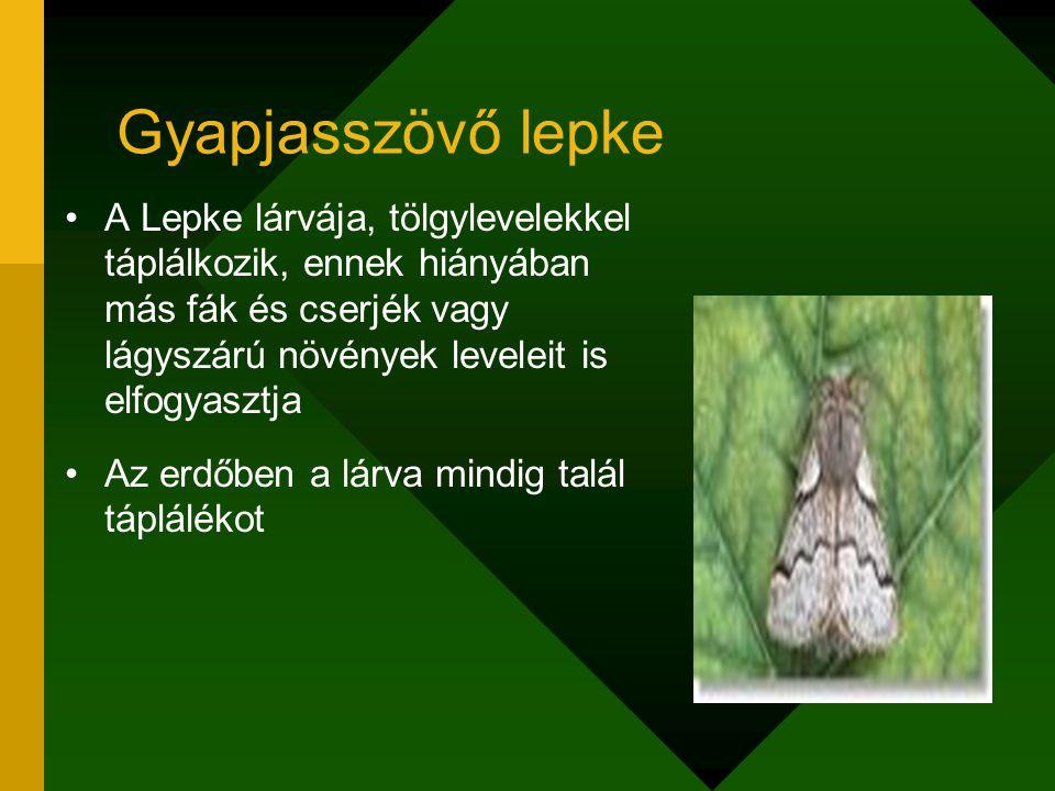 Gyapjasszövő lepke A Lepke lárvája, tölgylevelekkel táplálkozik, ennek hiányában más fák és cserjék vagy lágyszárú növények leveleit is elfogyasztja A
