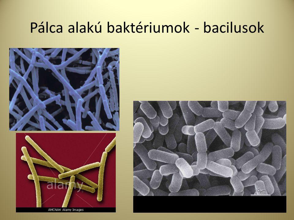 Legismertebb kórokozó patogén mikroorganizmusok E.Coli 0157:H7