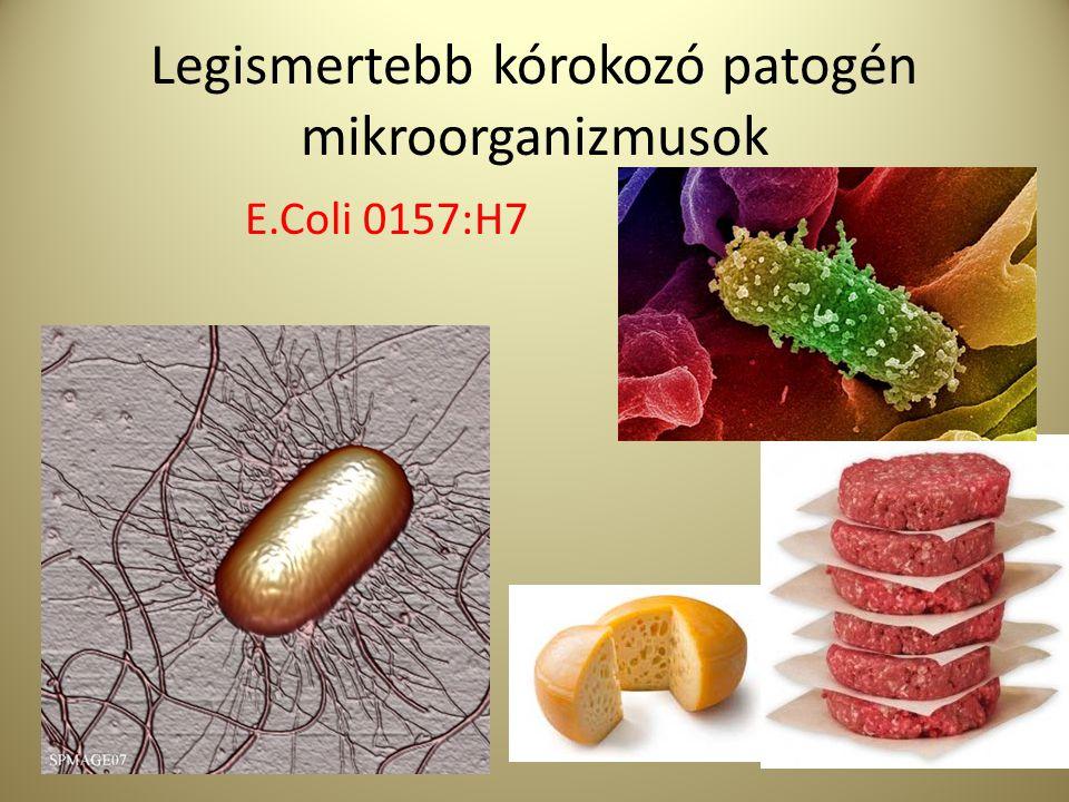 Legismertebb kórokozó patogén mikroorganizmusok Clostridium botulinum
