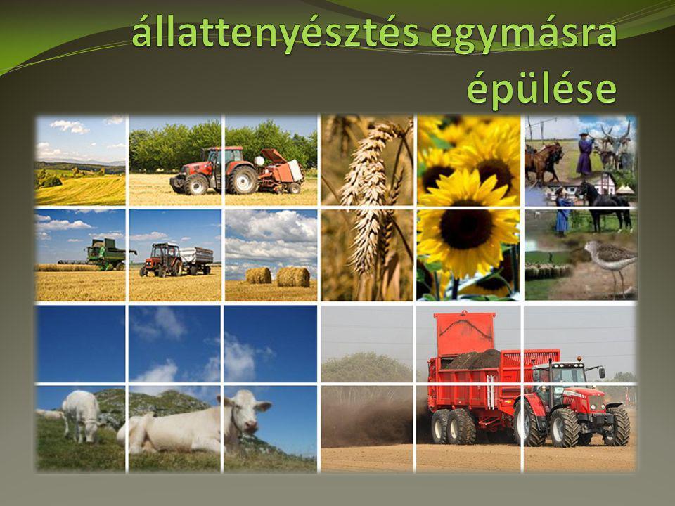 Nagy területen termesztett növényeink alapadatai kultúravetésidő1000 mag tömeg / g csíraszámsortáv Őszi búzaX/1-240-445-6 milliógabona Őszi árpaIX/3-X/137-424,5 milliógabona zabIIII/1-327-324,8-5 milliógabona Szemes kukorica IV/2-3100-40055-80 ezerkapás napraforgóIV/2-355-7540-55 ezerkapás káposztarepceIX/1-23,5-6600-800 ezerDupla gabona szójaIV/2-4120-200550-650 ezerDupla gabona lucernaIII/2- IV/1ésVIII/1 2-2,412-13 milliógabona cukorrépaIII/3-IV/1kiszerelésfügő1,2-1,6 százezer Sűrített kapás