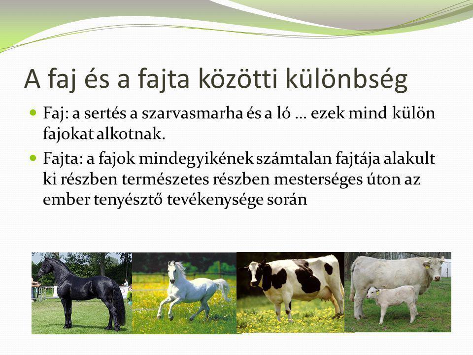 A faj és a fajta közötti különbség Faj: a sertés a szarvasmarha és a ló … ezek mind külön fajokat alkotnak. Fajta: a fajok mindegyikének számtalan faj
