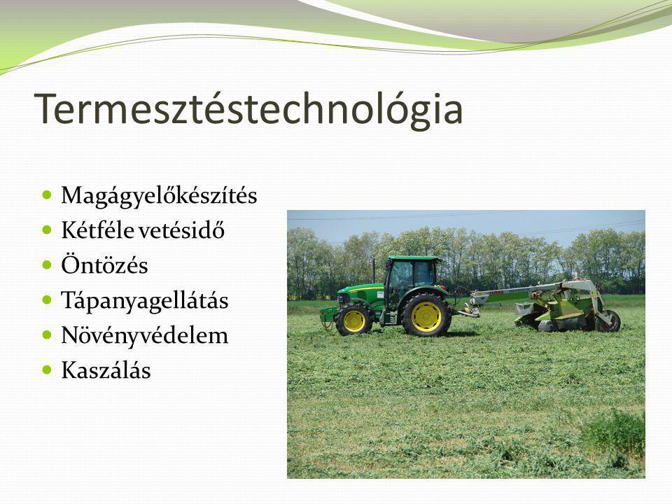Termesztéstechnológia Magágyelőkészítés Kétféle vetésidő Öntözés Tápanyagellátás Növényvédelem Kaszálás