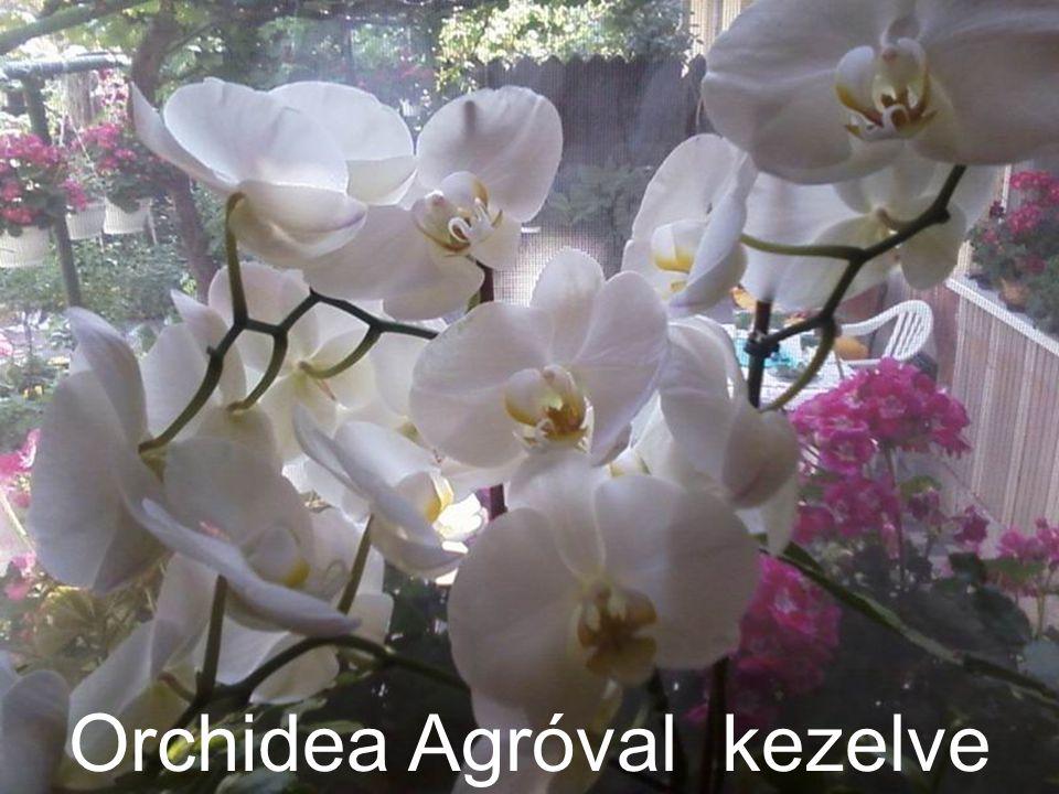 Orchidea Agróval kezelve