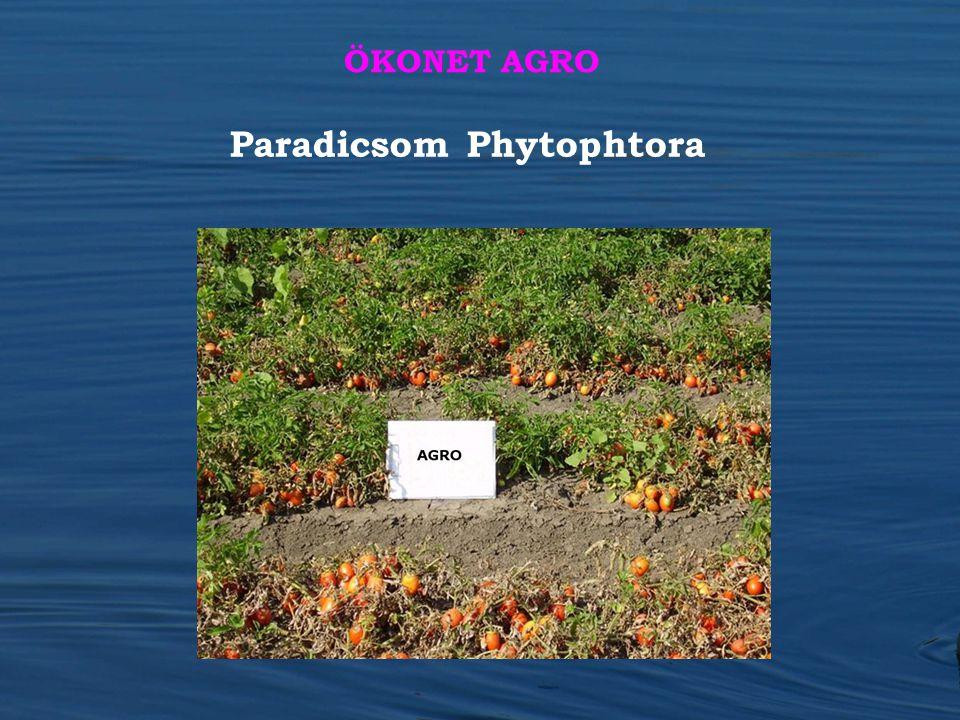 Paradicsom Phytophtora ÖKONET AGRO