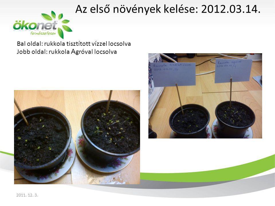 Bal oldal: rukkola tisztított vízzel locsolva Jobb oldal: rukkola A gróval locsolva Rukkola: 2012.03.18.