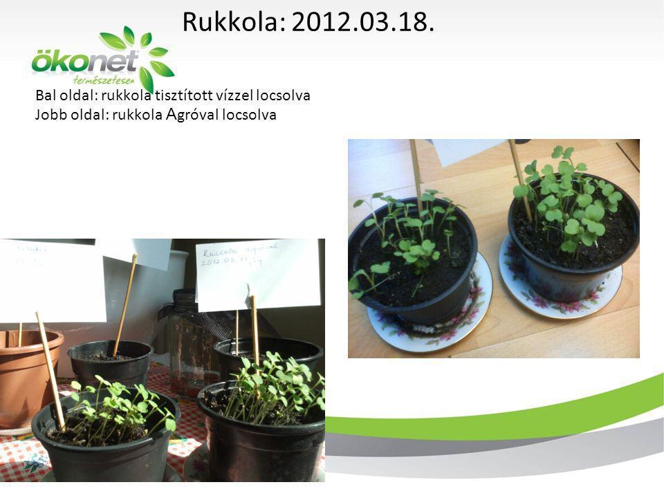 Bal oldal: rukkola tisztított vízzel locsolva Jobb oldal: rukkola A gróval locsolva Rukkola: 2012.03.18. 2011. 12. 3.