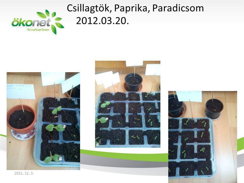 Csillagtök, Paprika, Paradicsom 2012.03.20. 2011. 12. 3.