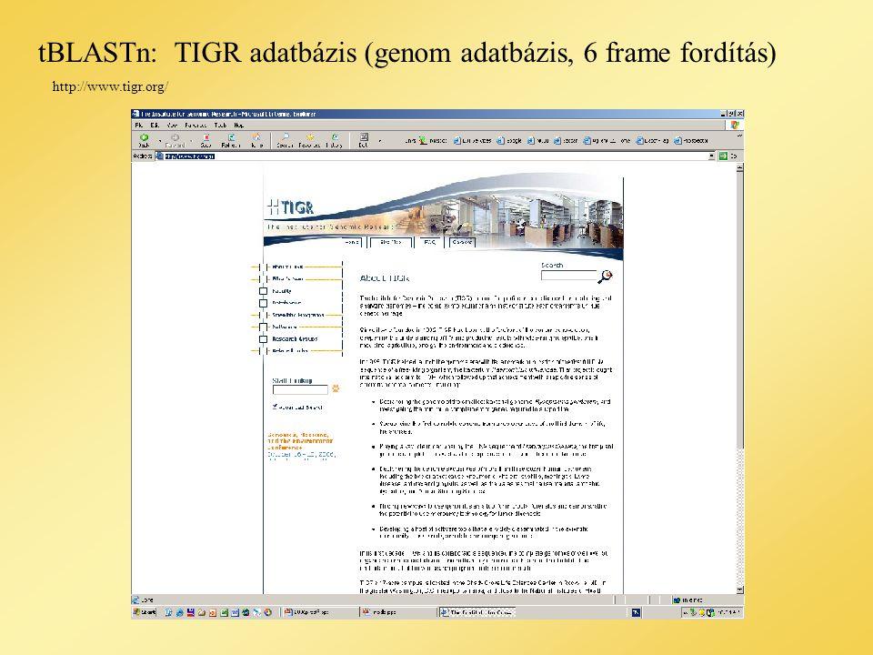 tBLASTn:TIGR adatbázis (genom adatbázis, 6 frame fordítás) http://www.tigr.org/