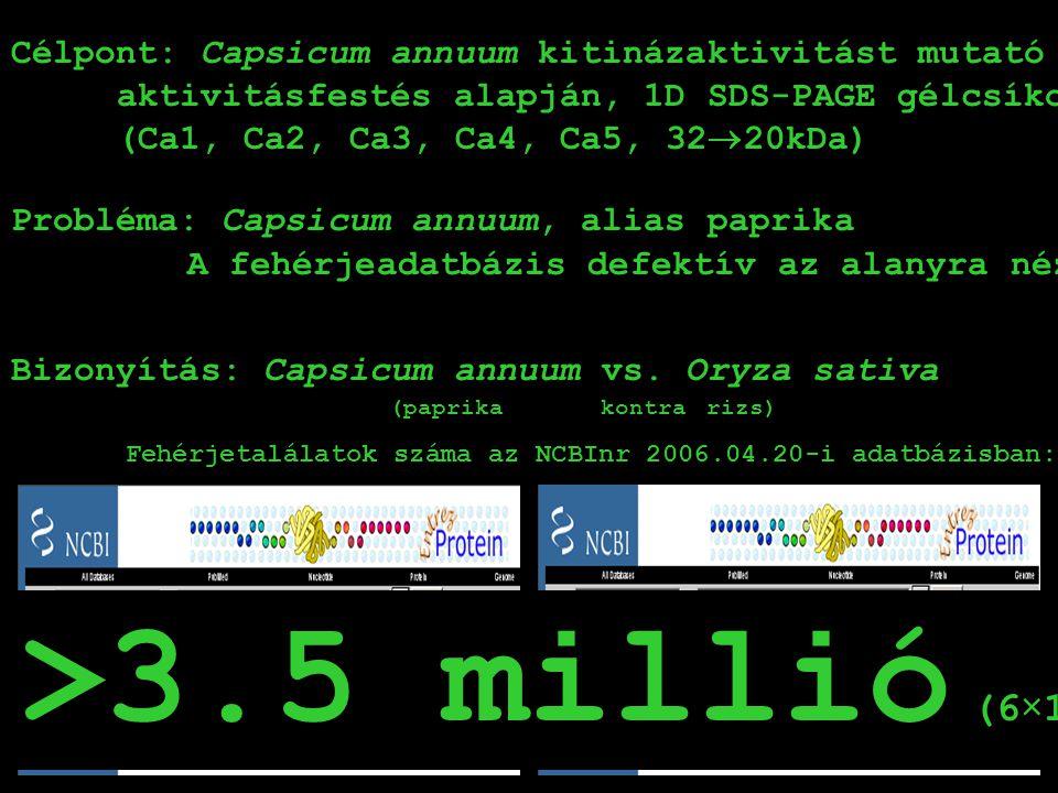 Ca3: SpeciesProtein Name 1MUS MUSCULUSadenylate kinase 3 2PSEUDOMONAS SYRINGAE PV.