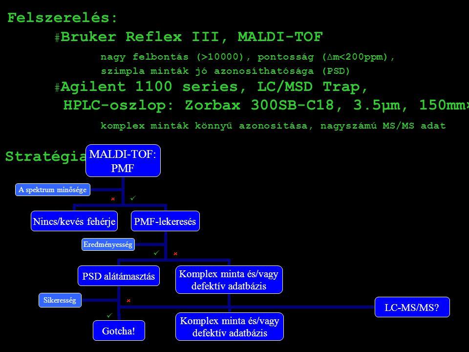 Felszerelés: BBruker Reflex III, MALDI-TOF nagy felbontás (>10000), pontosság (∆m<200ppm), szimpla minták jó azonosíthatósága (PSD) AAgilent 1100 series, LC/MSD Trap, HPLC-oszlop: Zorbax 300SB-C18, 3.5µm, 150mm×75µm komplex minták könnyű azonosítása, nagyszámú MS/MS adat Stratégia: MALDI-TOF: PMF Nincs/kevés fehérje PMF-lekeresés PSD alátámasztás Gotcha.