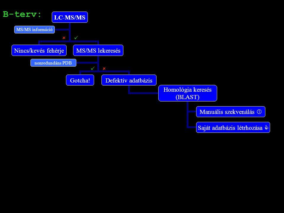 MALDI-TOF összefoglalás: Ca1: PSD-vel igazolt paprikafehérje Ca2, Ca3, Ca4, Ca5: A lekeresések eredménye nem bíztató, PSD analízisre alkalmatlan minták Ca2, Ca5: Gyenge spektrumok Ca3, Ca4: Túl komplex minták B-terv: LC-MS/MS